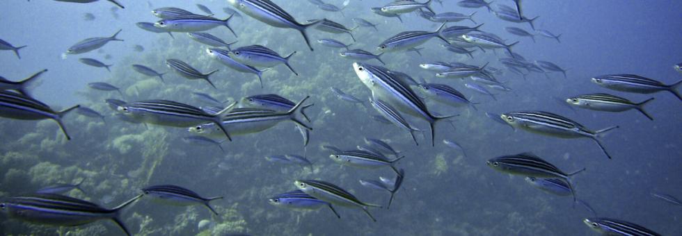 εκκολαπτήρια ψαριών