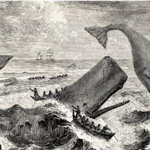 Φάλαινα η κυνηγημένη